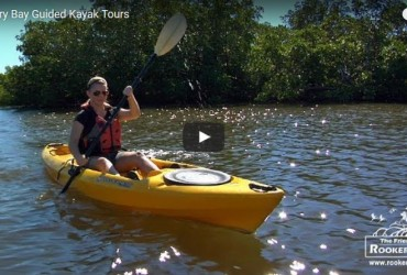 Rookery Bay Guided Kayak Tours